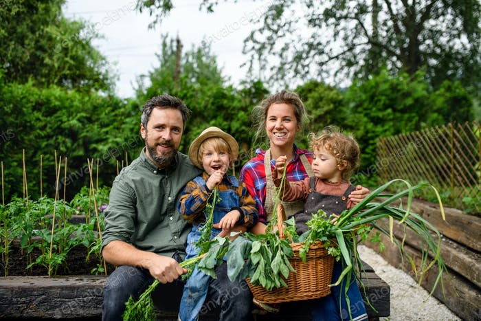 Family with small children gardening on farm, growing organic vegetables