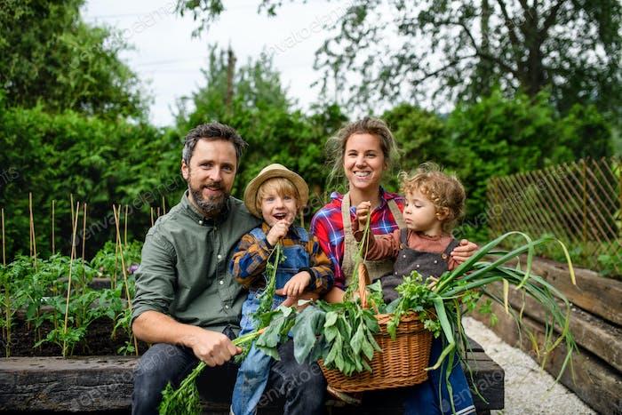 Familie mit kleinen Kindern Gartenarbeit auf dem Bauernhof, Anbau von Bio-Gemüse