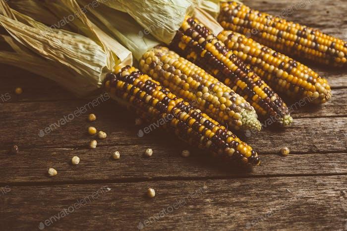 Raw Organic Corn Ready to Cook.