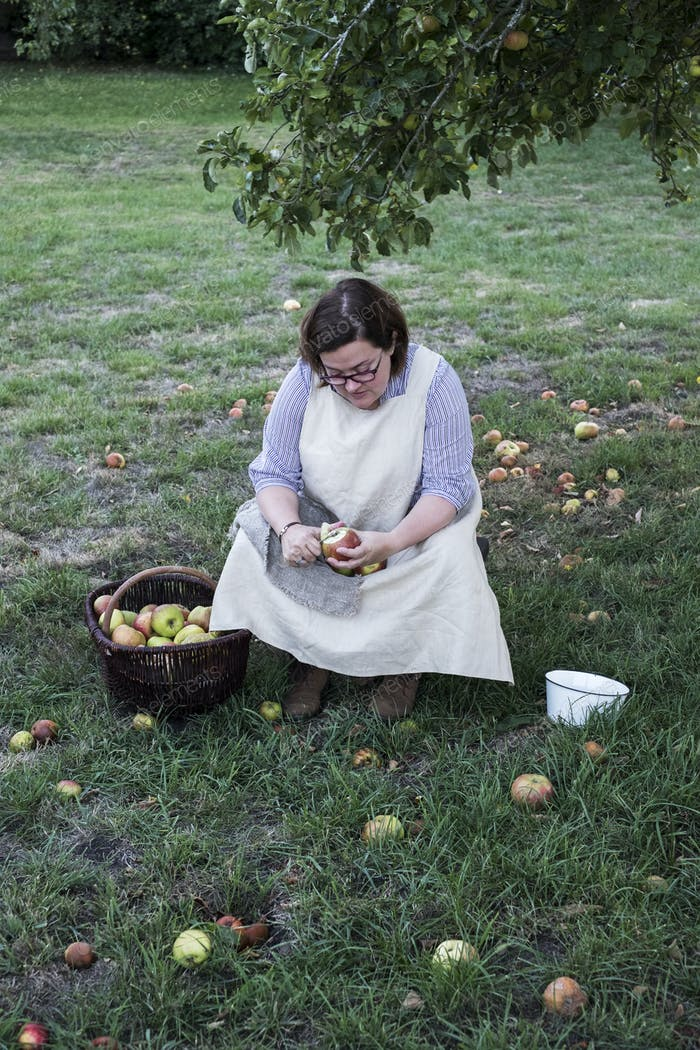 Frau sitzt in einem Obstgarten unter Apfelbaum neben braunem Weidenkorb mit frisch gepflückten Äpfeln,