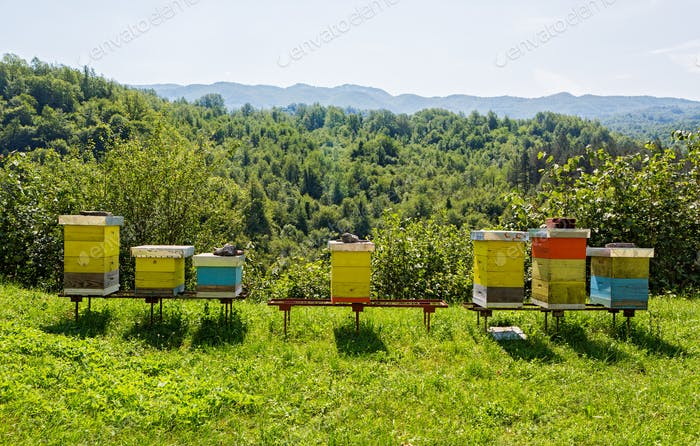 Bee hives in the forest