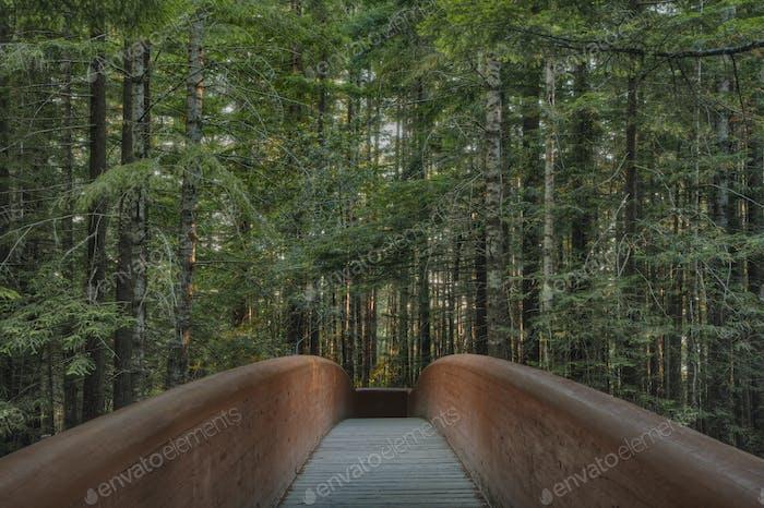 53804, Footbridge in Redwood National Park, Kalifornien, Vereinigte Staaten von Amerika