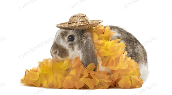 Festive rabbit with hat and flowers, isolated on white