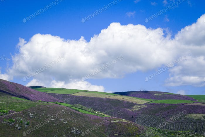 Green meadows and magenta heaths in the high hills near the clouds