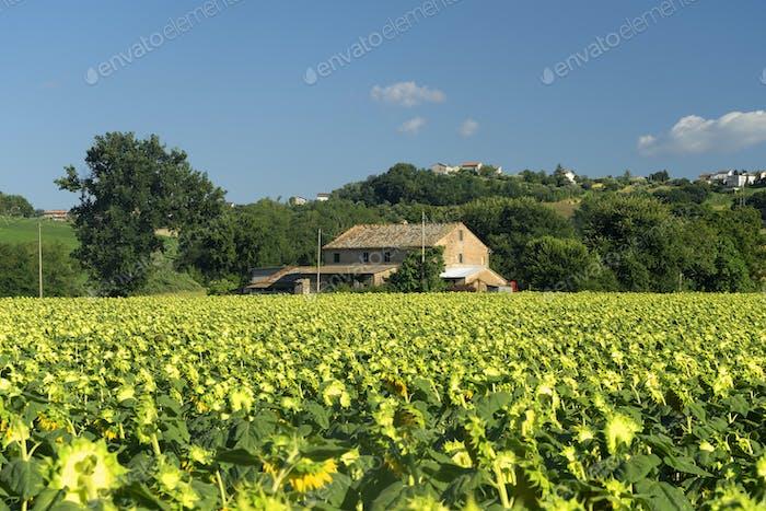 Paisaje rural cerca de Petriolo, Marches, Italia