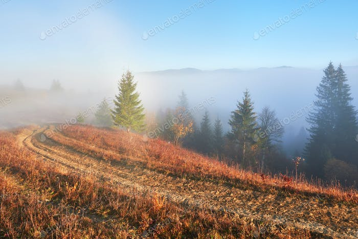 Fairy sunrise in the mountain forest landscape in the morning. The fog over the majestic pine forest