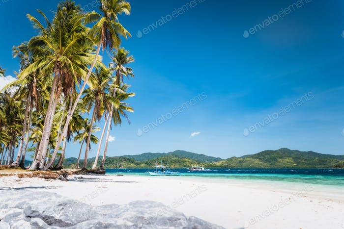 Ipil beach with coconut palm trees, sandy beach and blue ocean. El Nido, Palawan, Philippines