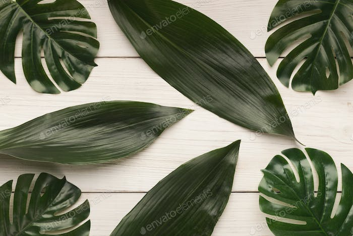 Big leaves on white background, top view