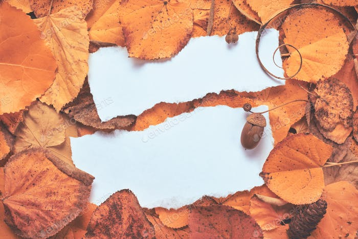 Creative autumn season layout with blank note paper as copy space