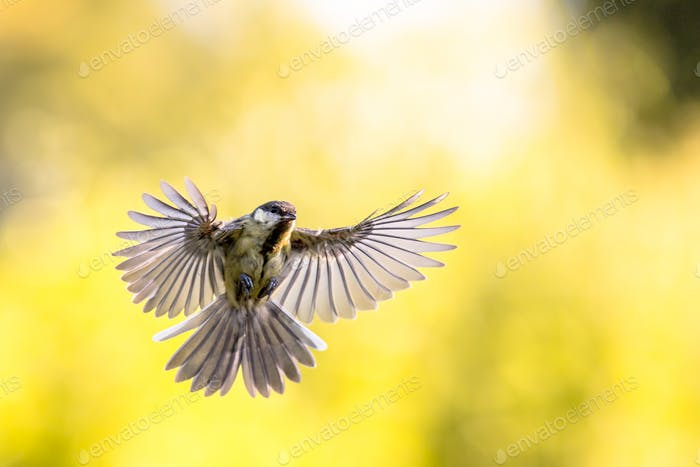 Bird in flight on bright yellow background with lots of copyspac