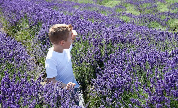 Boy in lavender field at summer day