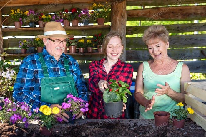 Glückliche Familie, die Blumen zusammen pflanzt.