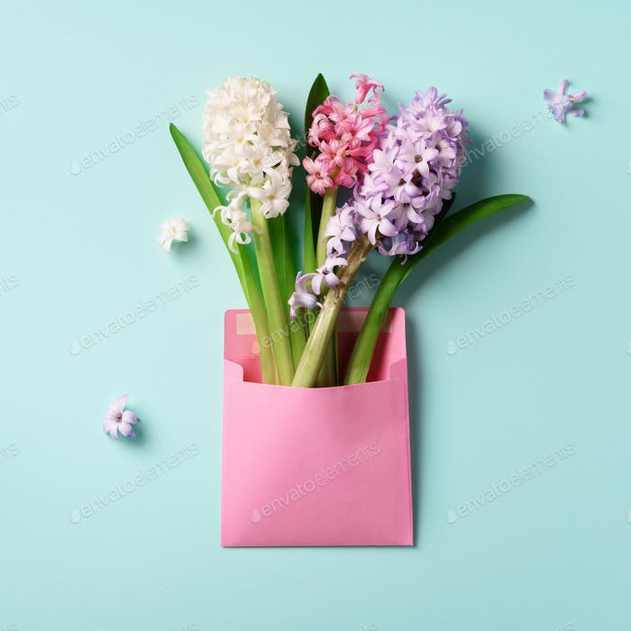 Spring hyacinth flowers in pink postal envelope over blue background with copy space. Top view, flat