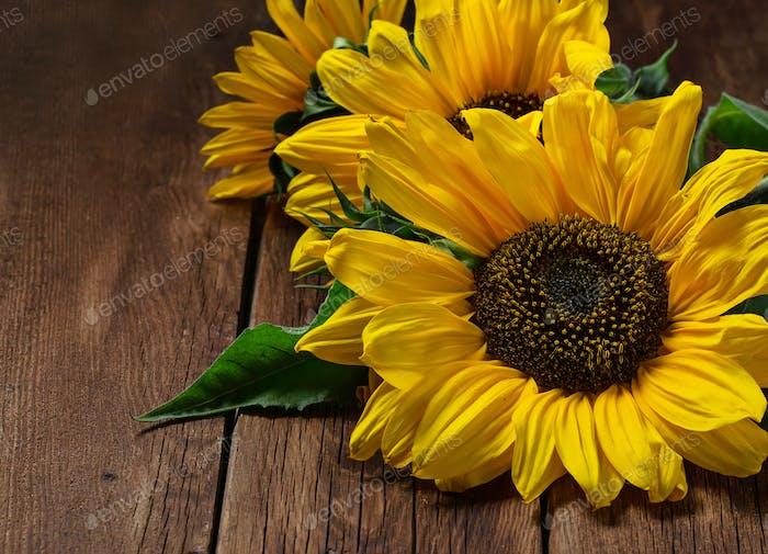 Yellow sunflower on wooden background