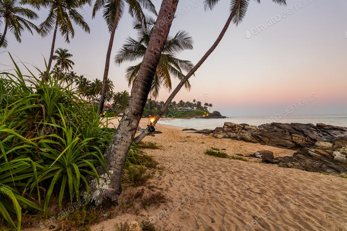 Sunset on the beach with coconut palms. Sri Lanka