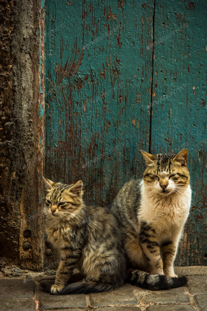 Two lovely cats sitting at fron door in Morocco