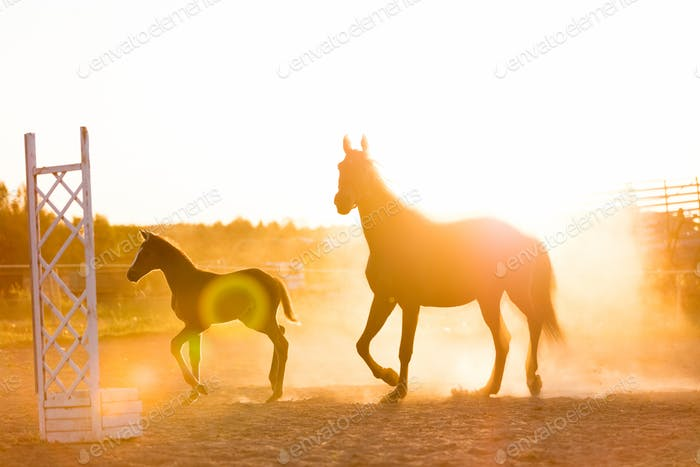 Mature horse and a colt standing on the sand field