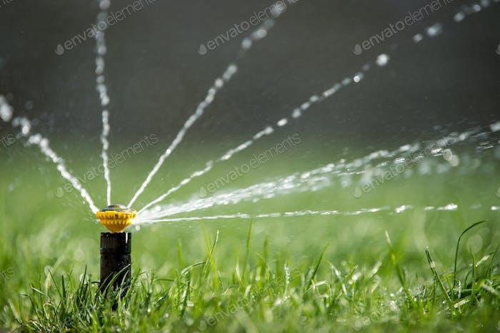 Sprinkler in action watering grass