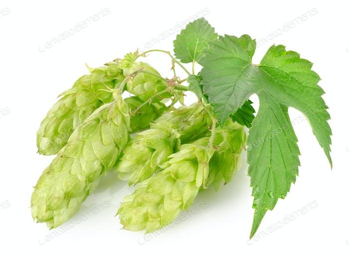 Cluster of hops
