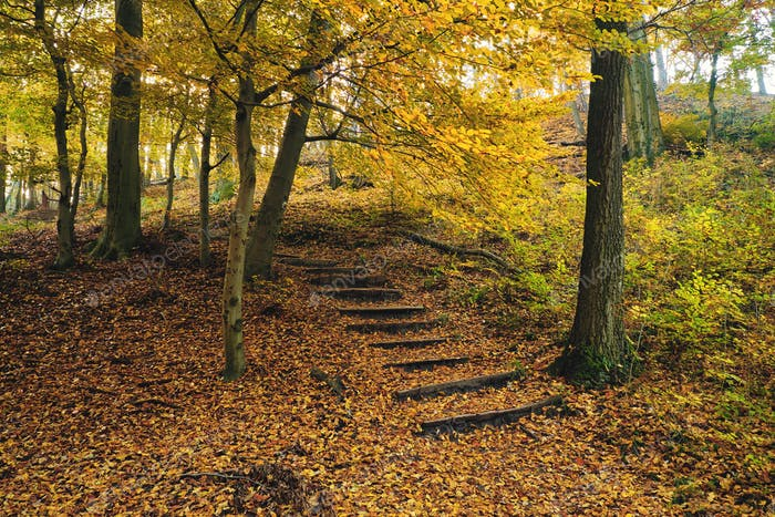 Stairs path on autumn forest