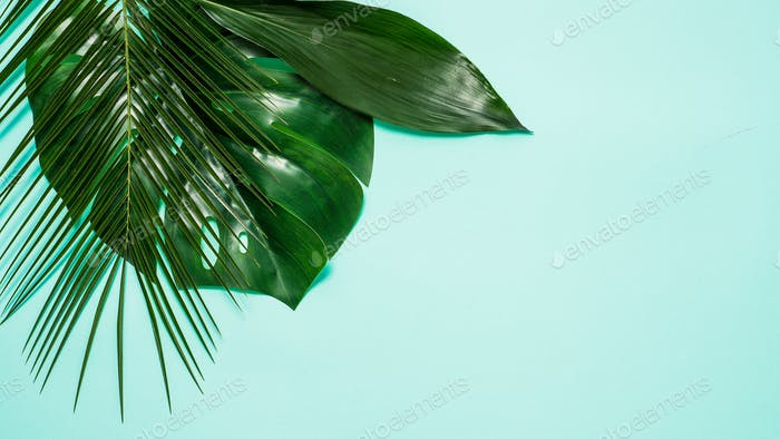 Tropical background. Tropical leaves on blue