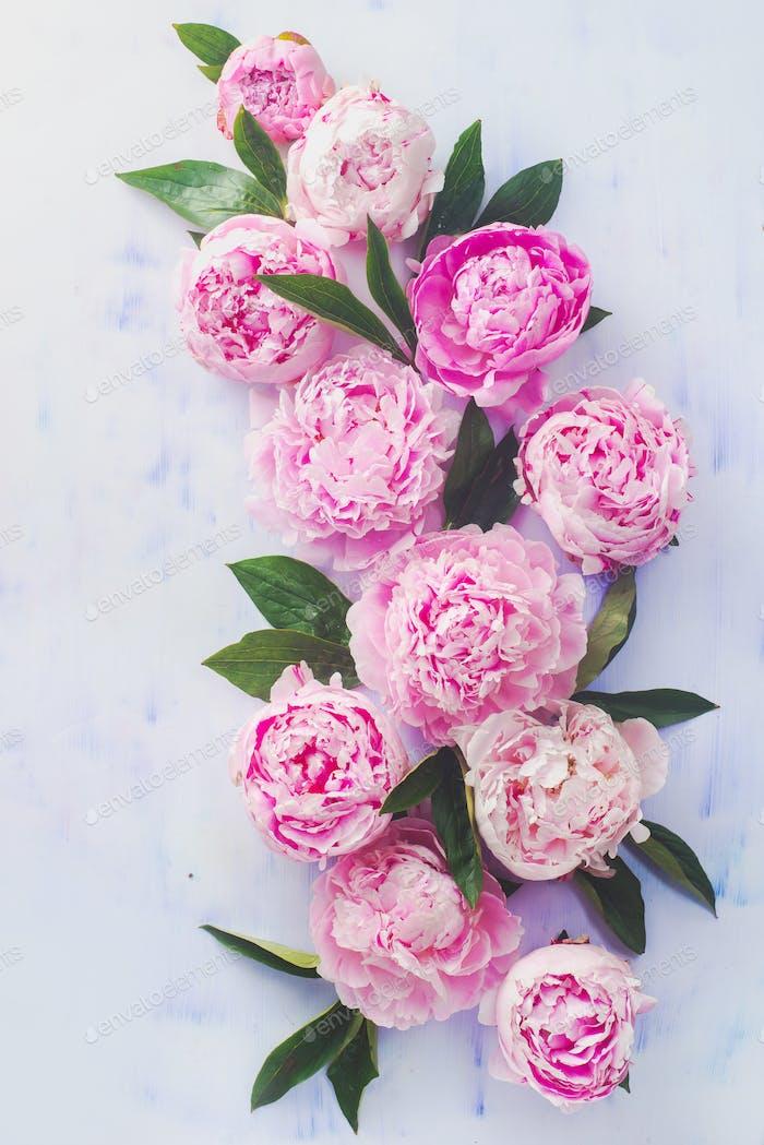 Minimal gestylte flache Llage mit Pfingstrosenblüten, Blütenblättern und Blättern auf einem Pastellhintergrund