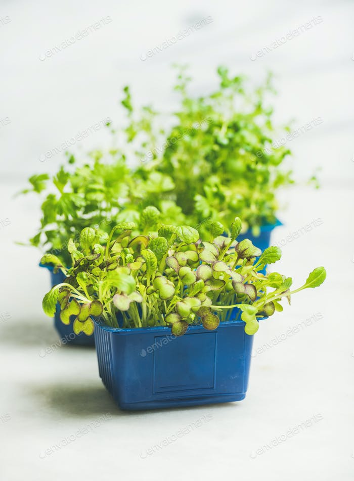 Fresh spring green live radish kress sprouts, white marble background