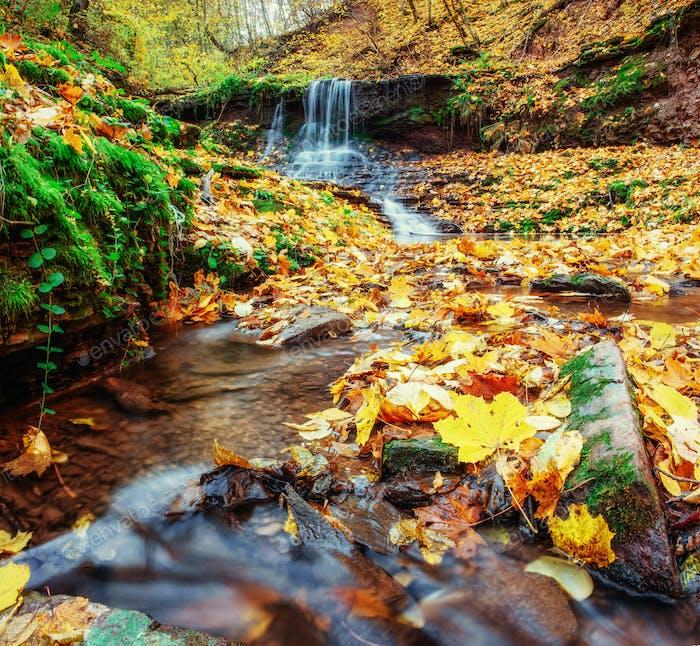 Waterfall in Autumn. Beautiful golden days. Carpathian Ukraine Europe