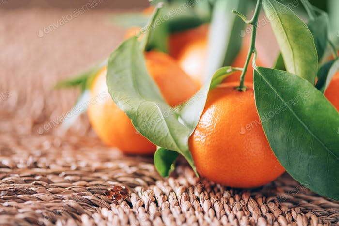 Tangerine or clementine with green palm leaves on rattan background. Copy space. Christmas or New