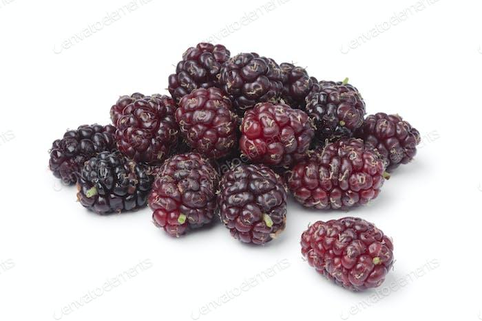 Fresh picked ripe mulberries