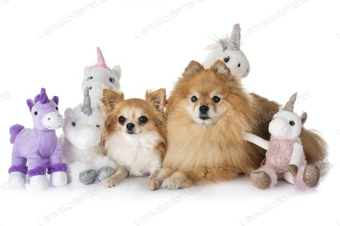 little dogs and unicorn