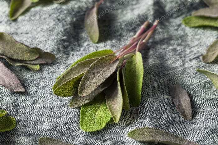 Raw Organic Purple Sage