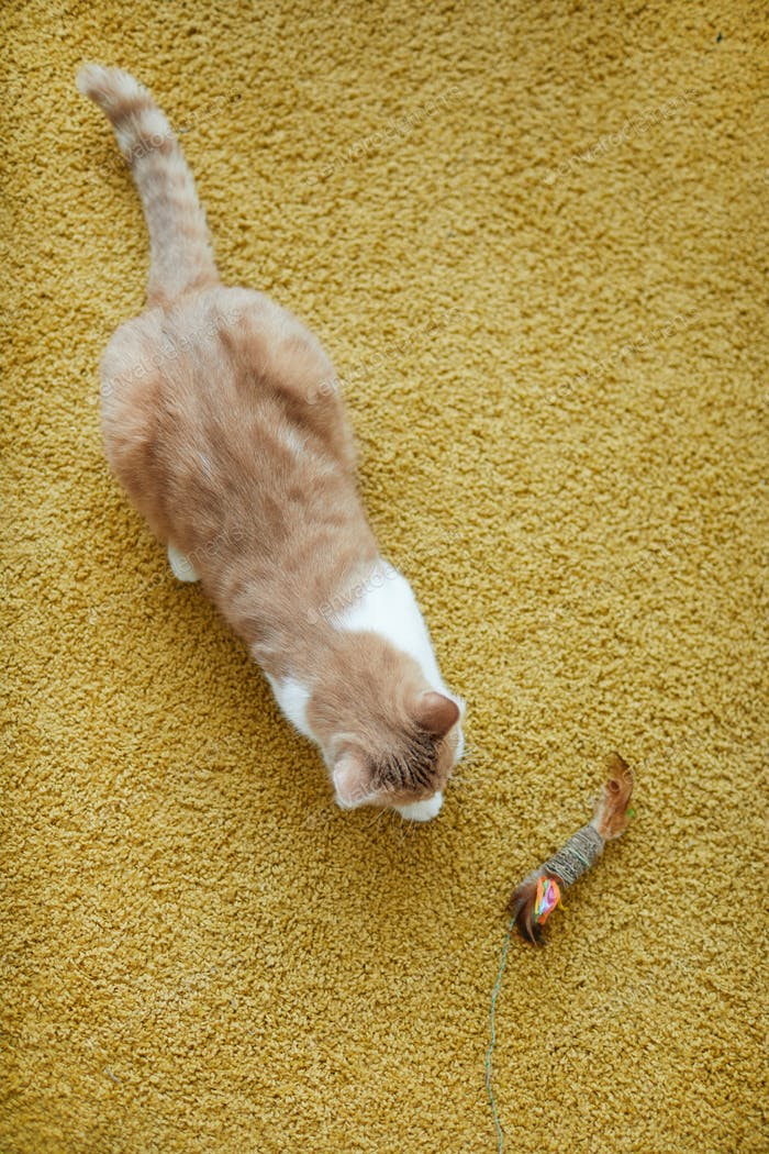 Katze mit Spielzeug auf dem Boden