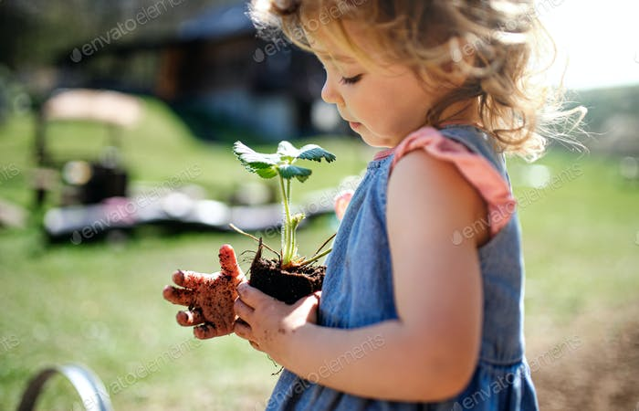Small girl with dirty hands outdoors in garden, sustainable lifestyle concept