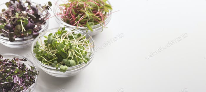Different Micro greens in glass plates on white