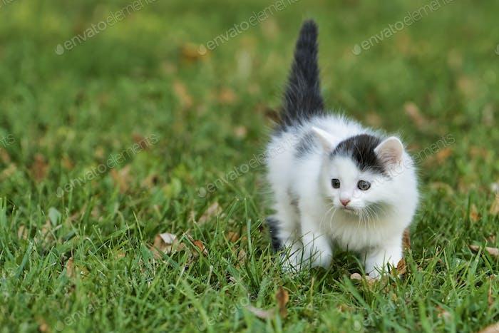 Little white kitten playing on the grass