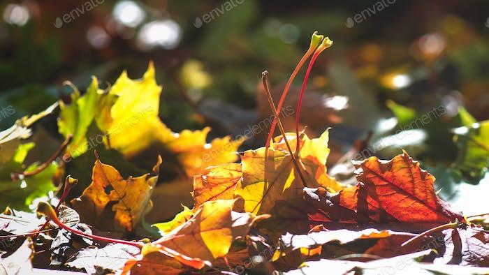 The sun illuminates colorful autumn leaves