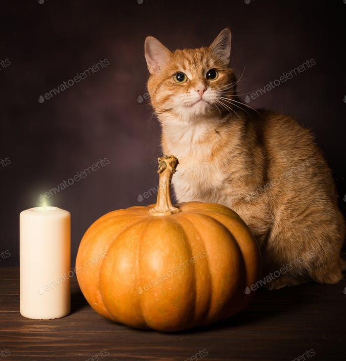 Red cat and pumpkin