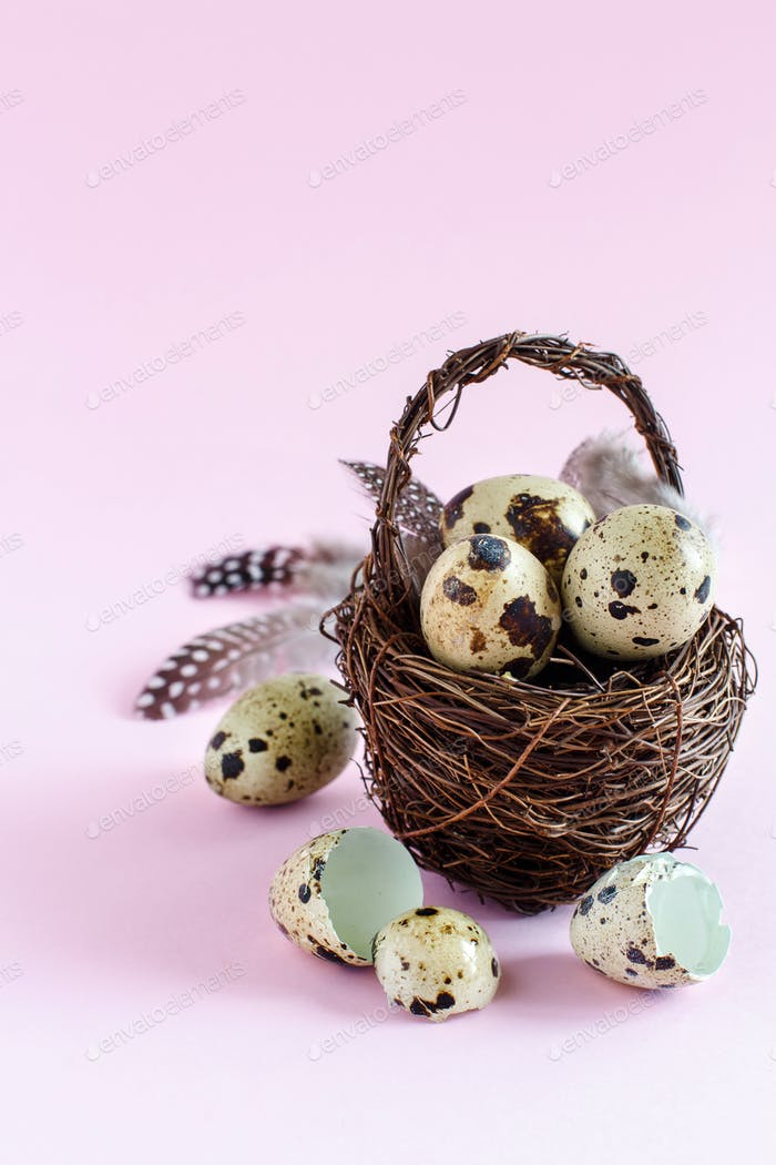 Quail eggs in a bascket on a pastel pink background