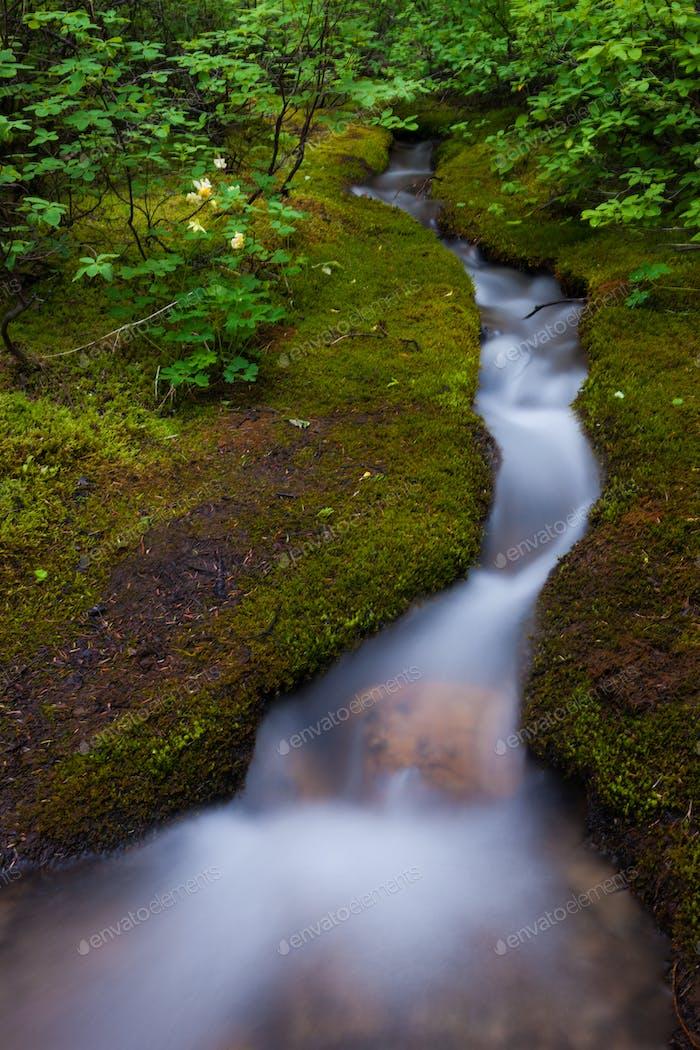 Alpine Stream, ein Zeitraffer effekt, Jasper National Park, Alberta, Kanada