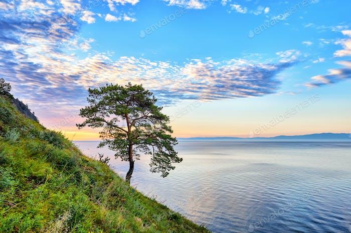 One pine on slope near Lake Baikal