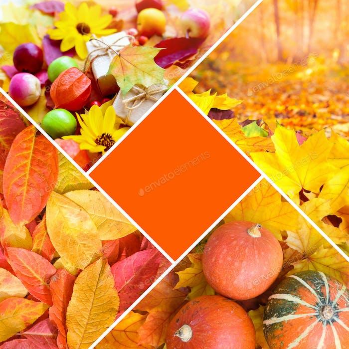Autumn creative collage of photos. Autumn concept with a central