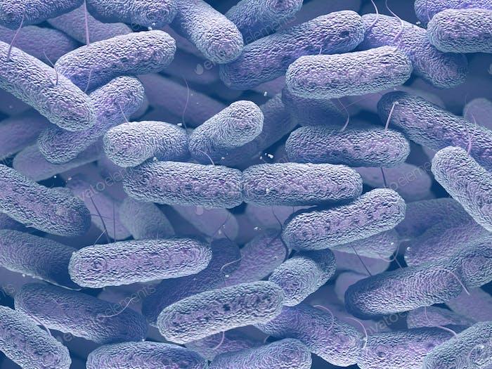 Enterobacteriaceae Bacteria Family