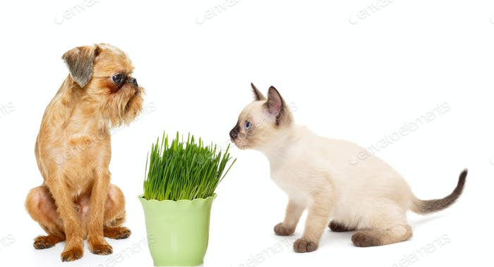 Kitten and puppy with pot of grass