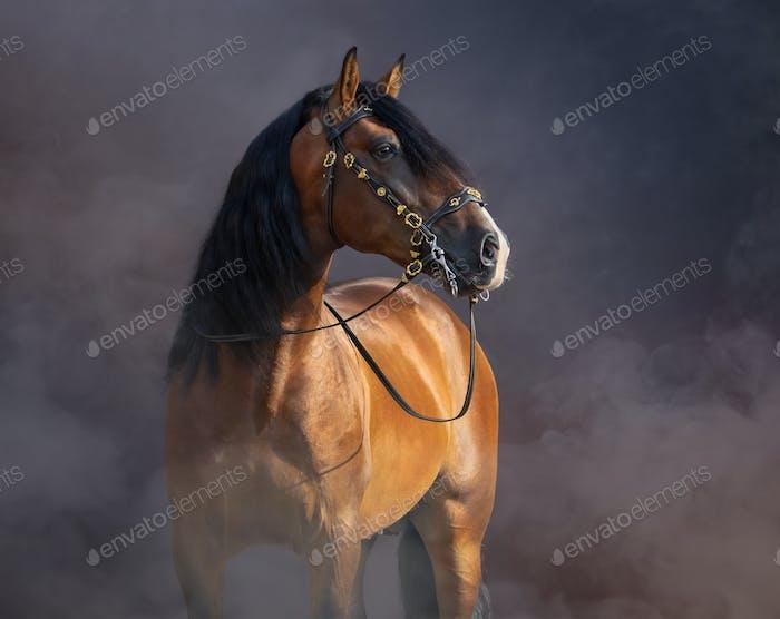 Spanisches Pferd im barocken Zaumzeug in leichtem Rauch.