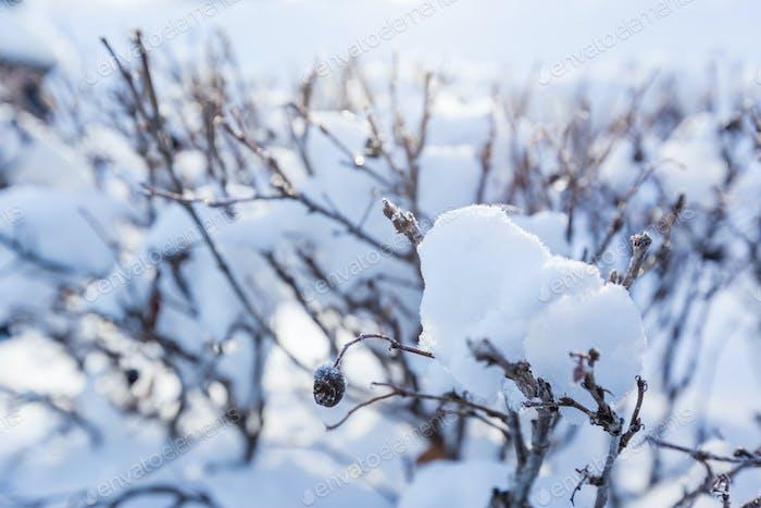 Winter, Schnee auf den Zweigen