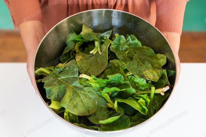 Frau hält in ihren Händen frische grüne Spinatblätter in einer metallischen Schüssel.