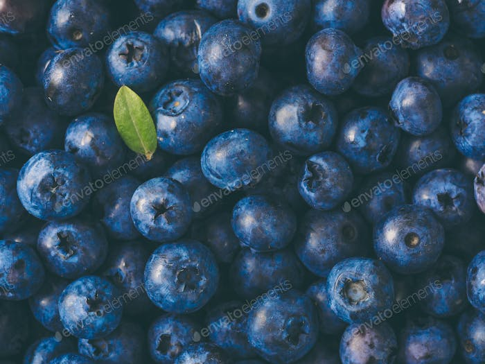 Blueberries background, copy space