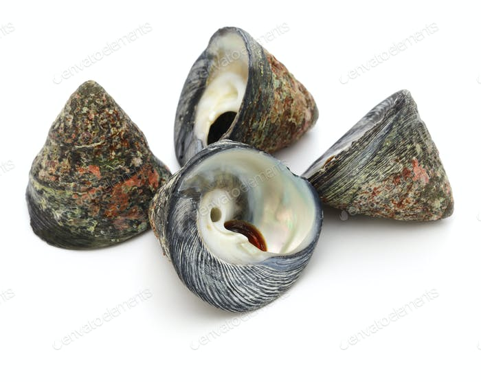 Tegula pfeifferi is a species of sea snail