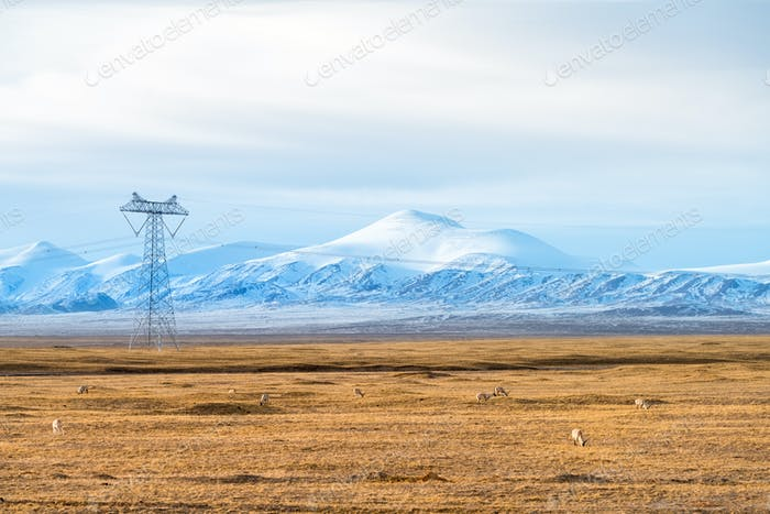 snow mountains landscape with the tibetan antelope